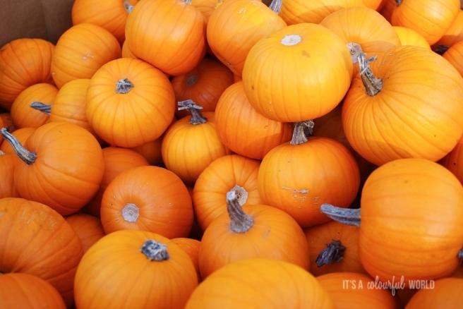 IACW - pumpkin.jpg